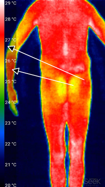 Termografisk bild av nästan hela baksidan av en person